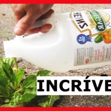 Se você usar vinagre no seu jardim, estas 11 maravilhas vão acontecer!