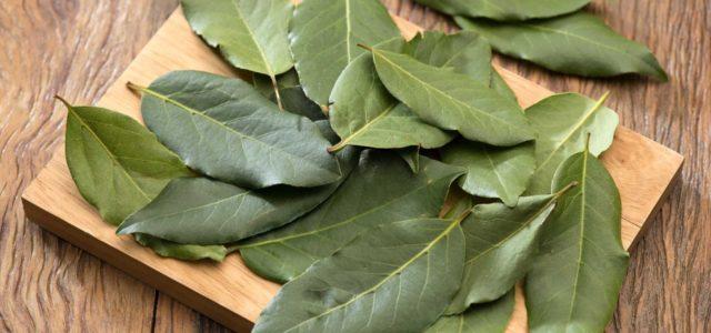 Com esta folha,você faz um chá poderoso para controlar a pressão ,Diabetes,combater insônia e até ajudar a emagrecer!
